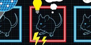 Científicos instalan recuerdos falsos en el cerebro de ratones