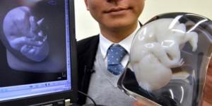 ¿Tu feto en modelo en 3D de tamaño real?