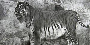 Fotos de los animales extintos más añorados