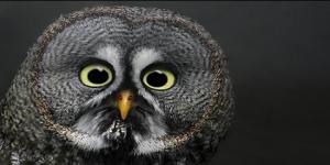 Fotos de Animales Sorprendidos