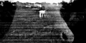 Leyendas Urbanas de la Web – El Nacimiento del Ciervo