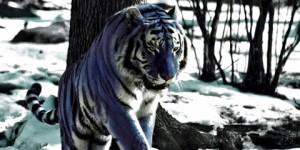 Los Pintorescos Tigres