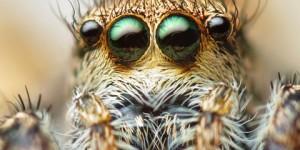 Algunas fobias comunes y otras no tanto