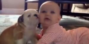 Un bulldog se come a un bebe… a besos