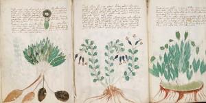 El misterio del Manuscrito de Voynich cerca de ser revelado
