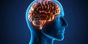 ¿Cómo funcionan el placer y el dolor en el cerebro?