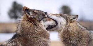¿Por qué los humanos se besan en la boca?