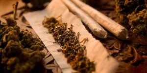 Otro beneficio más a la lista: La marihuana podría prevenir la obesidad